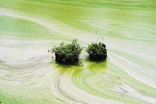Sumit Mehndiratta - Swamp 4