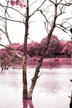 Sumit Mehndiratta - Swamp 5