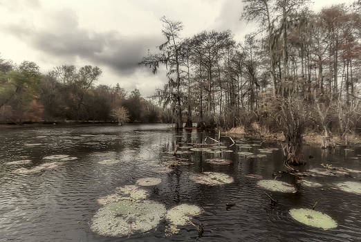 Swamp Alive by Stellina Giannitsi