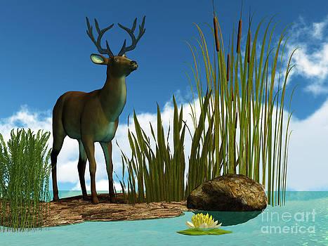 Corey Ford - Swamp Deer