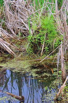 Corey Ford - Swamp Duckweed