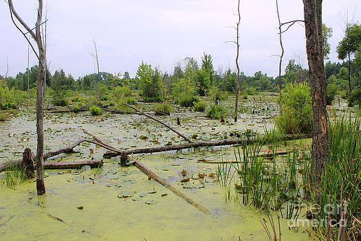 Corey Ford - Swamp Habitat