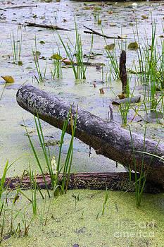 Corey Ford - Swamp Log