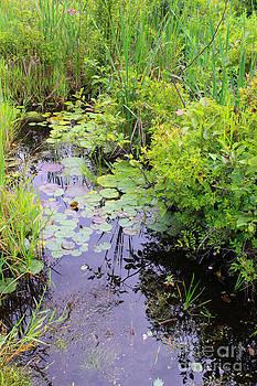 Corey Ford - Swamp Plants