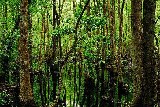 Swamp by Stefan Carpenter