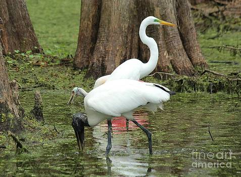 Swamp Trio by Theresa Willingham