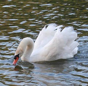 Swan 1 by Rebecca West