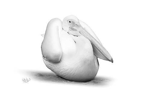 Swan by Farhan Raza Naqvi