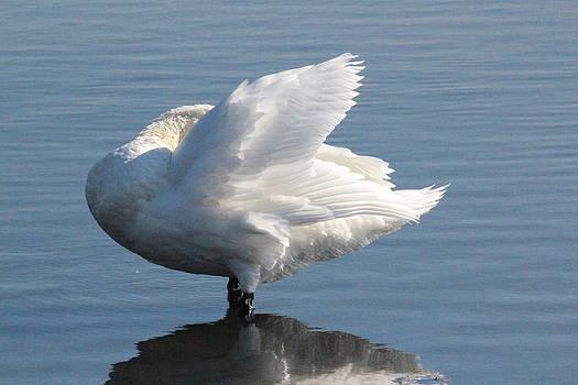 Rosanne Jordan - Swan Feathers