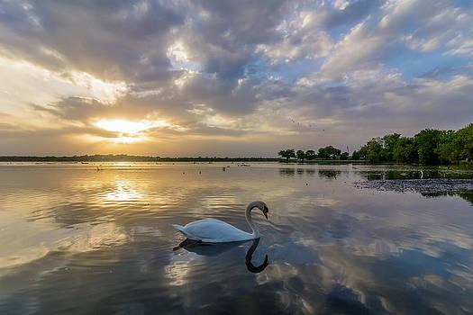 Swan Lake by Linda Dyer Kennedy