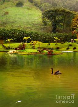 Swan lake by Paulo Sezio De Carvalho