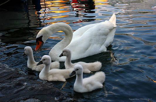 Swan Mum by Leena Pekkalainen