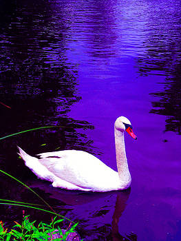 Swan on a lake of blue by Darryl  Kravitz
