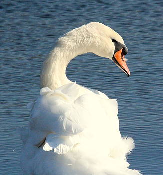 Rosanne Jordan - Swan Profile