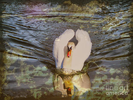 Cheryl Young - Swan Reflections