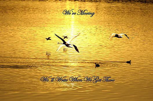 Randall Branham - Swans Flying over the water