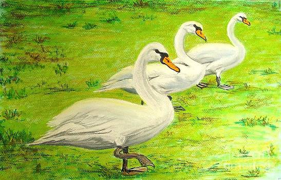 Swans in a row by Frank Giordano