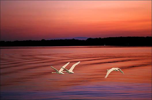 Randall Branham - Swans moving on