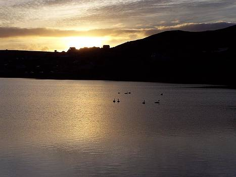 Swans on loch by George Leask