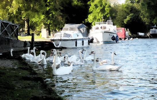 Swans by Prasida Yerra