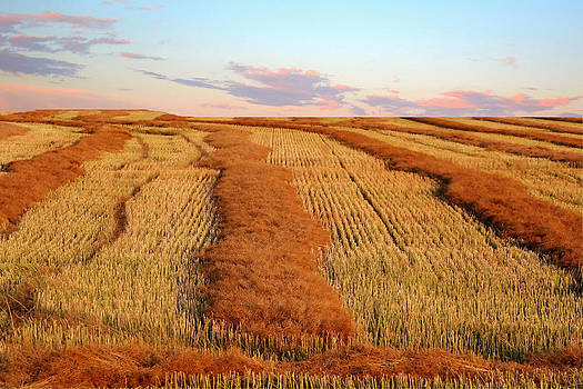 Swathed Field by Larry Trupp