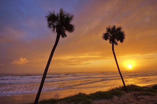 Swaying Palms at Sunrise by DM Photography- Dan Mongosa