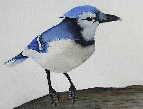 Sweet Blue Jay by Mary Gaines