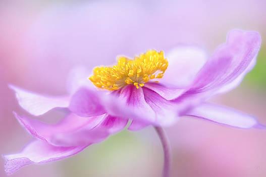 Sweet Love by Sarah-fiona Helme