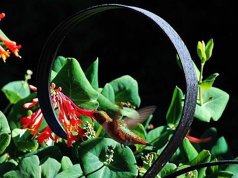 Sweet Nectar by Duane King