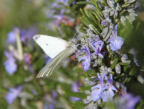 Sweet Nectar of Rosemary by Keeza Starr
