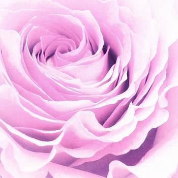 Angela Doelling AD DESIGN Photo and PhotoArt - Sweet pastel rose