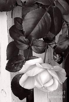 Sweet Petals by Avis  Noelle