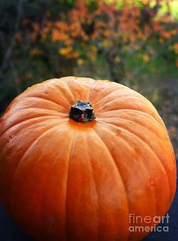 Sweet Pumpkin by Maria Janicki