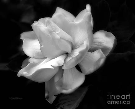 Michelle Wiarda - Sweetest Romance