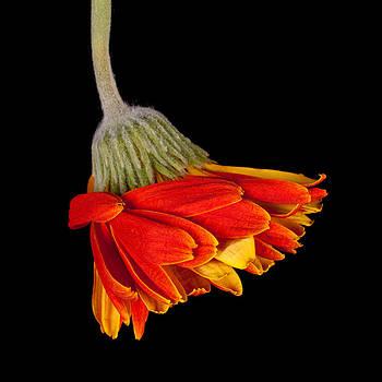 Swept Away by Rebecca Skinner