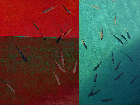 Swimming in colors by Cosmin Bicu