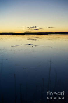 Birches Photography - Swimming into Sunset