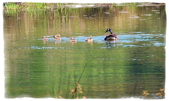 Swimming Lessons 1 by Tanya Jacobson-Smith