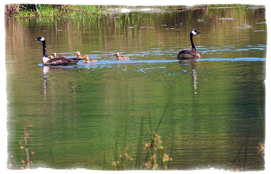 Swimming Lessons 3 by Tanya Jacobson-Smith