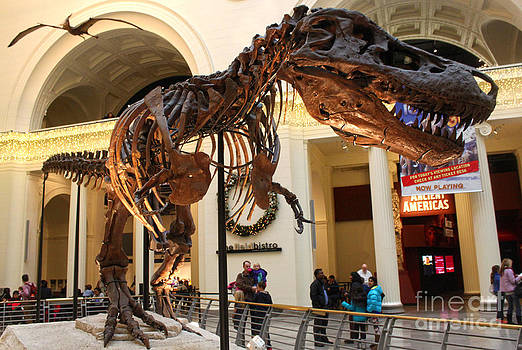 Gregory Dyer - T-Rex - Chicago Field Museum