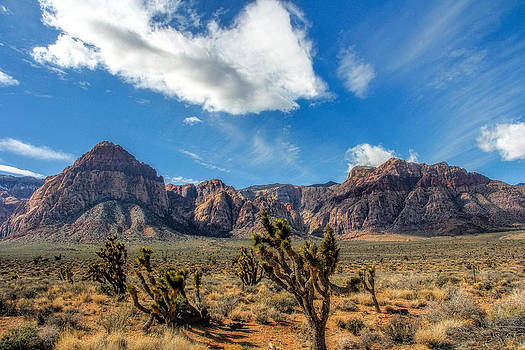 Take a hike by Tammy Espino