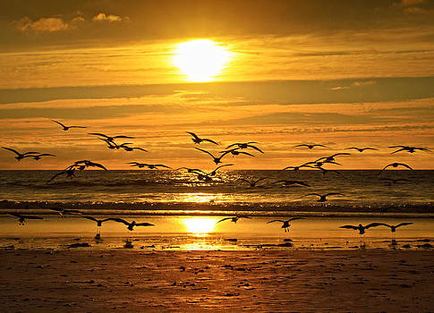 Take Flight at Sunset by Donna Pagakis