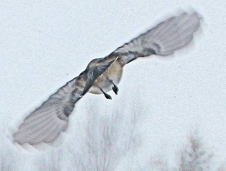 Take off by Gary Pavlosky
