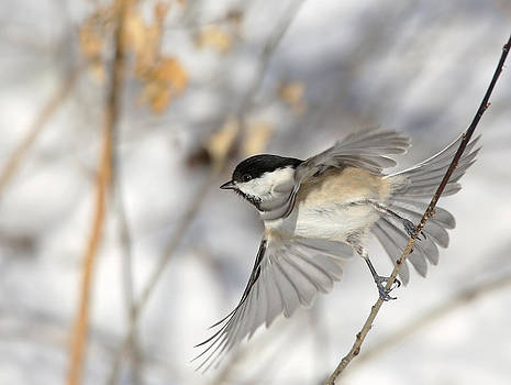 Take-off by Terry Cervi