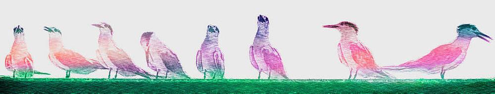 Taking Terns by Carol Kinkead