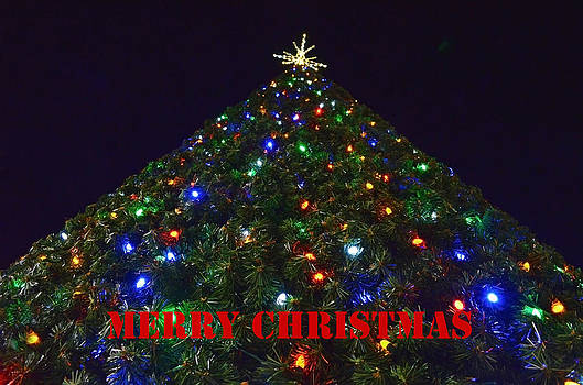 Tall Christmas Tree Perspective by Sandi OReilly