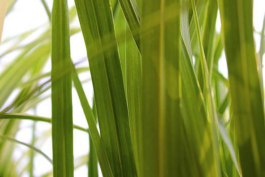 Carolyn Stagger Cokley - Tall Grass