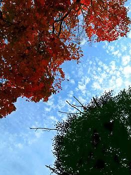 Tamarisk Sky by Anne Sterling