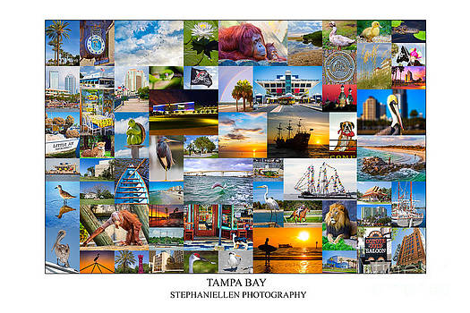 Tampa Bay Collage by Stephanie Hayes