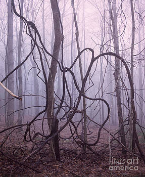 Tangled trees in morning fog by Tracy Knauer